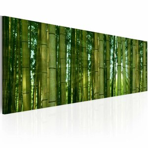Schilderij - Bamboe in de zon ,  groen , 1 luik , 120x40cm