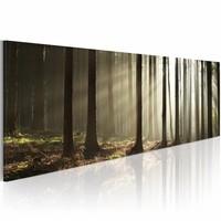 Schilderij - Ochtend in het bos  , boom , zwart wit , 1 luik , 120x40