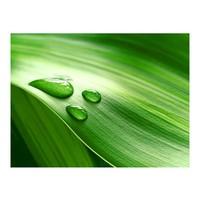 Fotobehang - Blad en drie druppels water