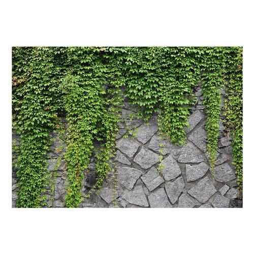 Fotobehang - Klimop - muur