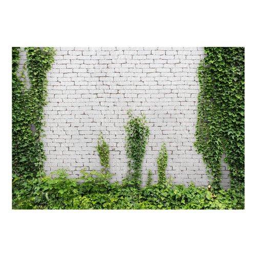 Fotobehang - Klimplant op witte muur