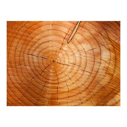 Fotobehang - Jaarlijkse ringen op een boomstam