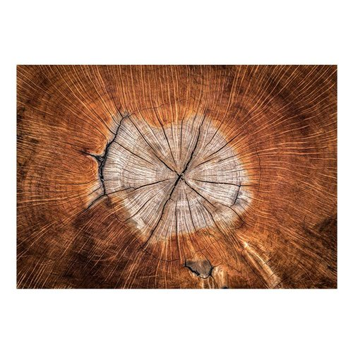Fotobehang - De ziel van een boom