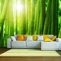 Fotobehang - Zon en bamboe