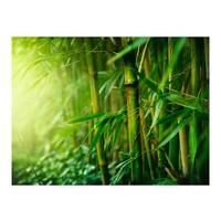 Fotobehang - jungle - bamboo