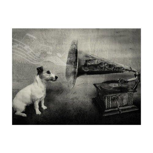 Fotobehang - Hond voor grammofoon , zwart wit