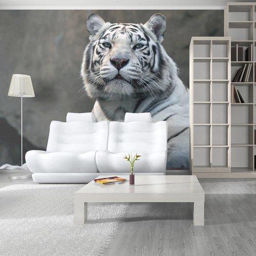 Fotobehang - Bengaalse tijger , grijs wit , 5 maten