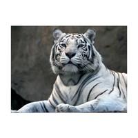 Fotobehang - Bengaalse tijger in dierentuin