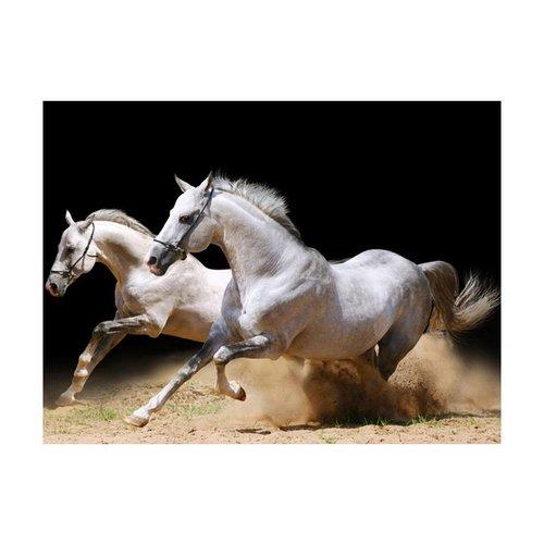 Fotobehang - Galopperende paarden op het zand , zwart wit