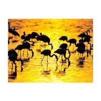 Fotobehang - Kenia: flamingo's aan het meer Nakuru , zwart geel