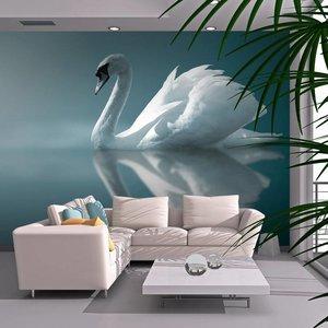 Fotobehang - Witte zwaan , blauw