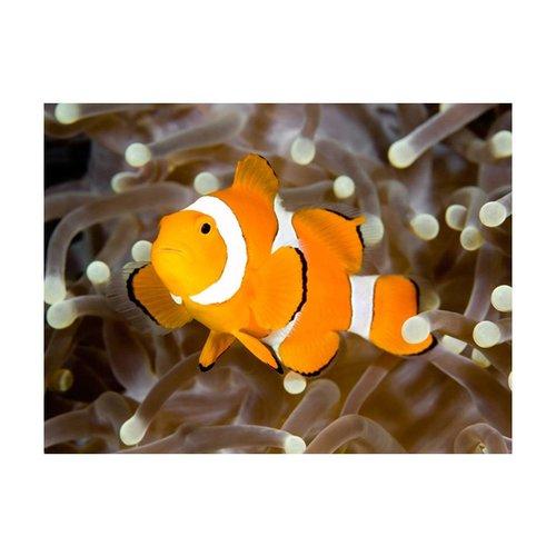 Fotobehang - Finding Nemo