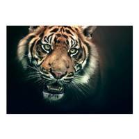 Fotobehang - Bengaalse Tijger , zwart bruin