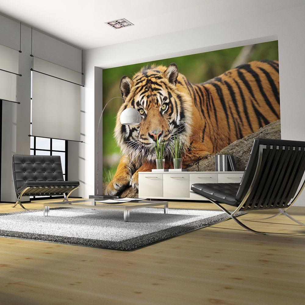Fotobehang - Sumatraanse tijger