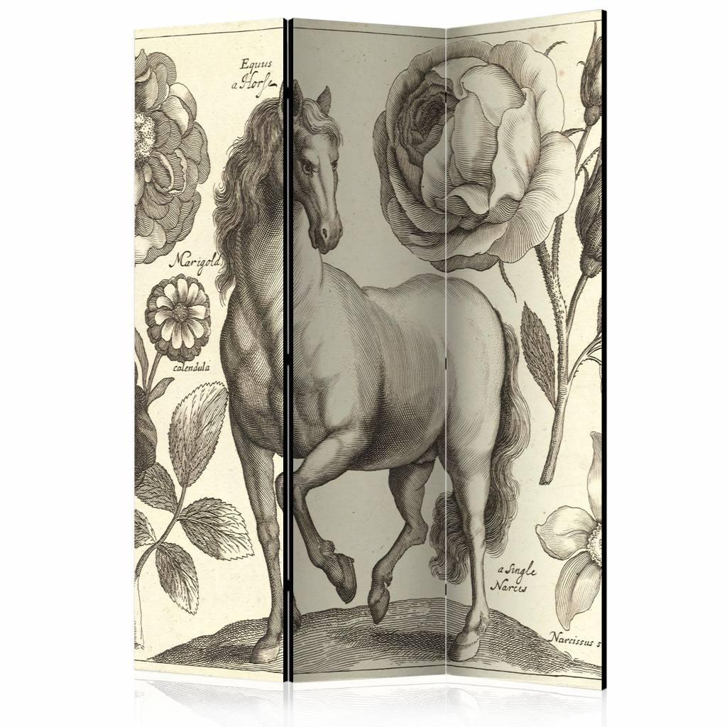Vouwscherm - Paard 135x172cm