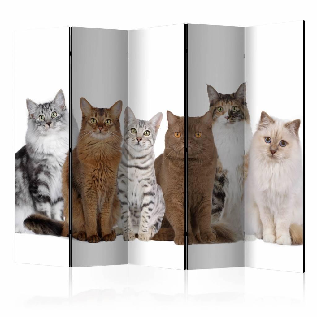 Vouwscherm - Lieve katten 225x172cm