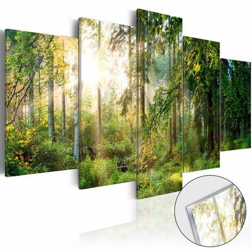 Afbeelding op acrylglas - Zonlicht door de bomen, Groen, 2 Maten, 5luik