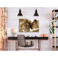 Doe-het-zelf op canvas schilderen - Lions In Love 60x40cm