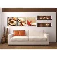 Schilderij - Schelpen, Beige, 150X50, 3luik