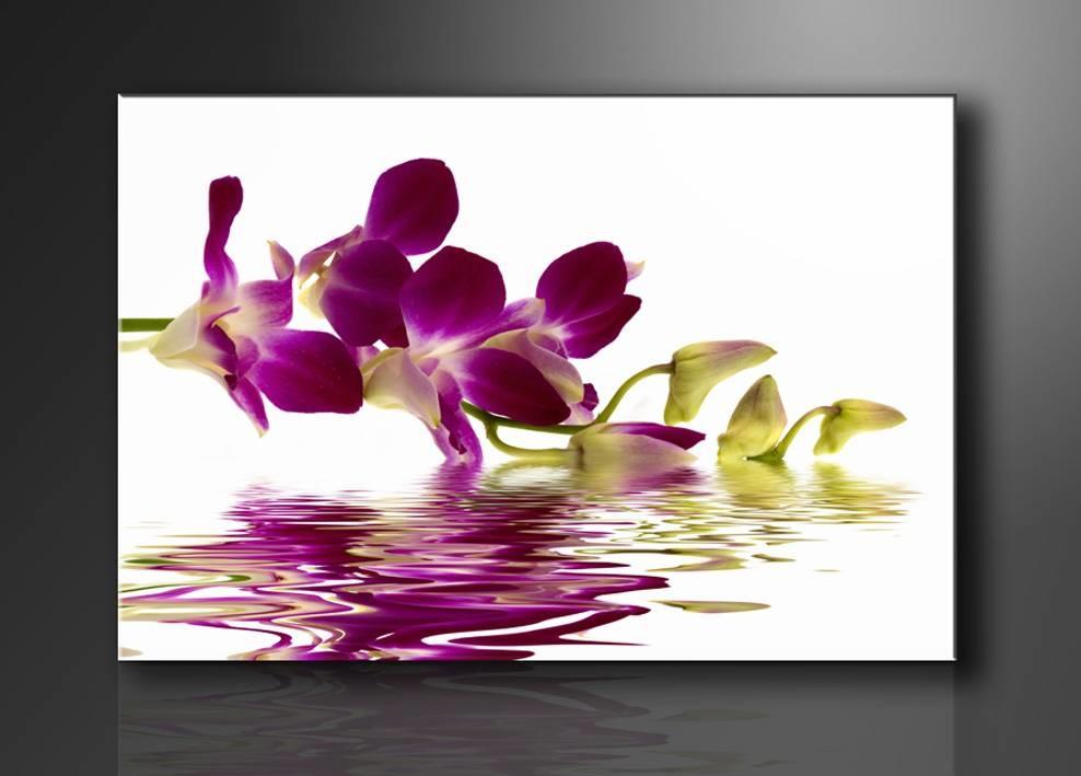 Schilderij - Orchidee, Paars/Wit, 80X60cm, 1luik