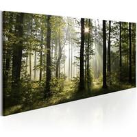 Schilderij - Prachtige ochtend in het bos