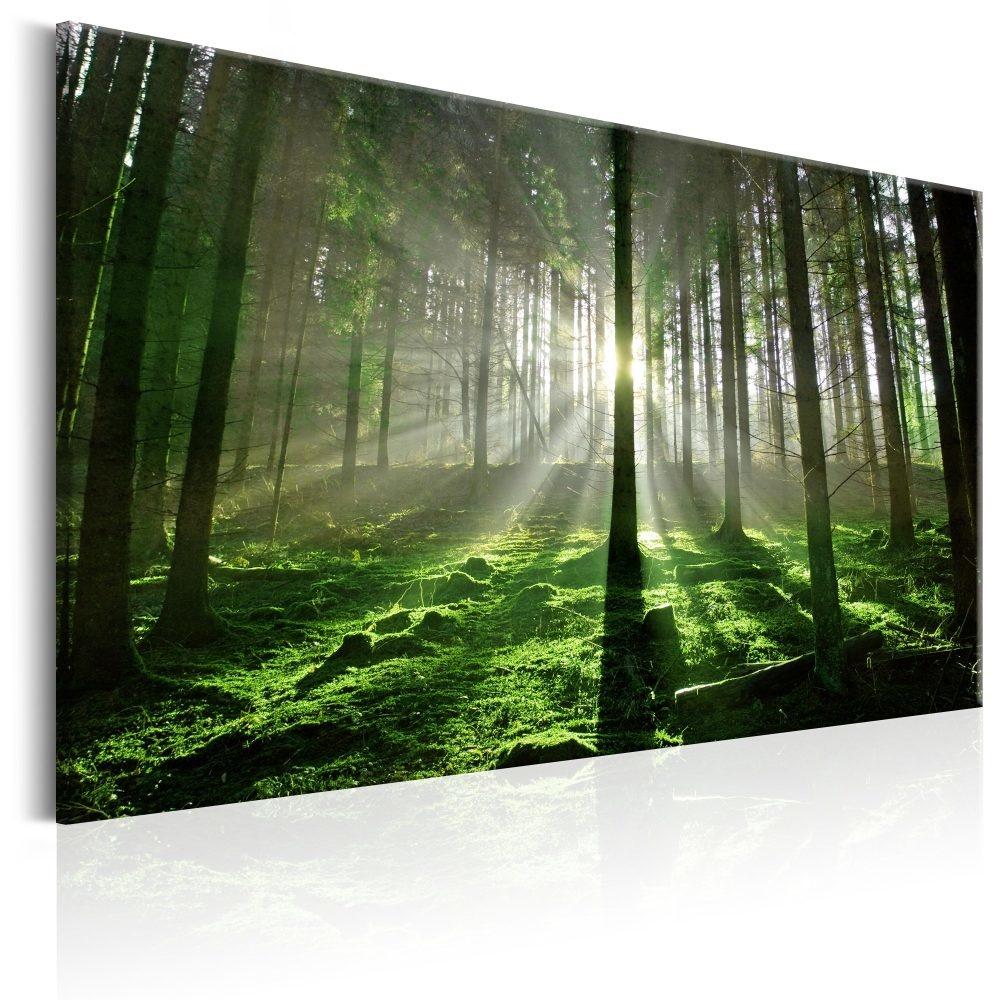Schilderij - Zonlicht door de bomen