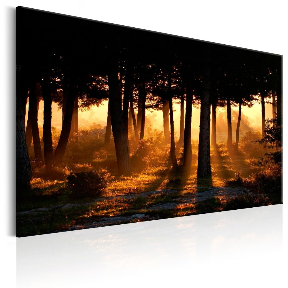 Schilderij - Ochtend in het Bos