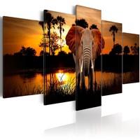 Schilderij - Olifant bij een meer met ondergaande zon , 5 luik