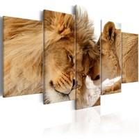 Schilderij - leeuwen liefde in kleur , 5 luik