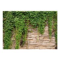 Fotobehang -Muur met  klimop II