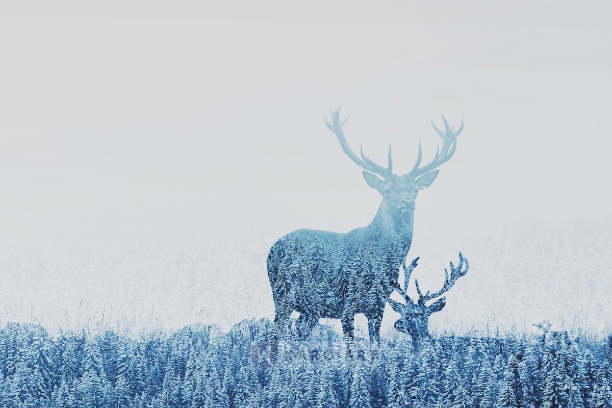 Schilderij - Herten opgenomen door het bos