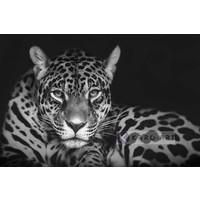 Karo-art Schilderij - Jaguar in zwart en wit, premium print, 3 maten , Wanddecoratie