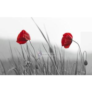 Karo-art Schilderij - Rode klaprozen op zwart-wit achtergrond