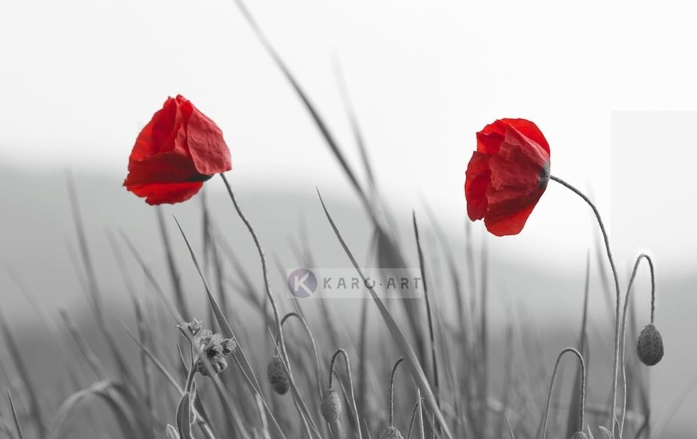 Schilderij - Rode klaprozen op zwart-wit achtergrond