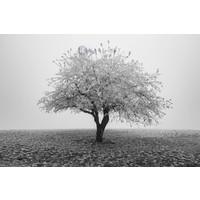 Karo-art Schilderij - Eenzame boom in het zwart wit, premium print, 3 maten , Wanddecoratie