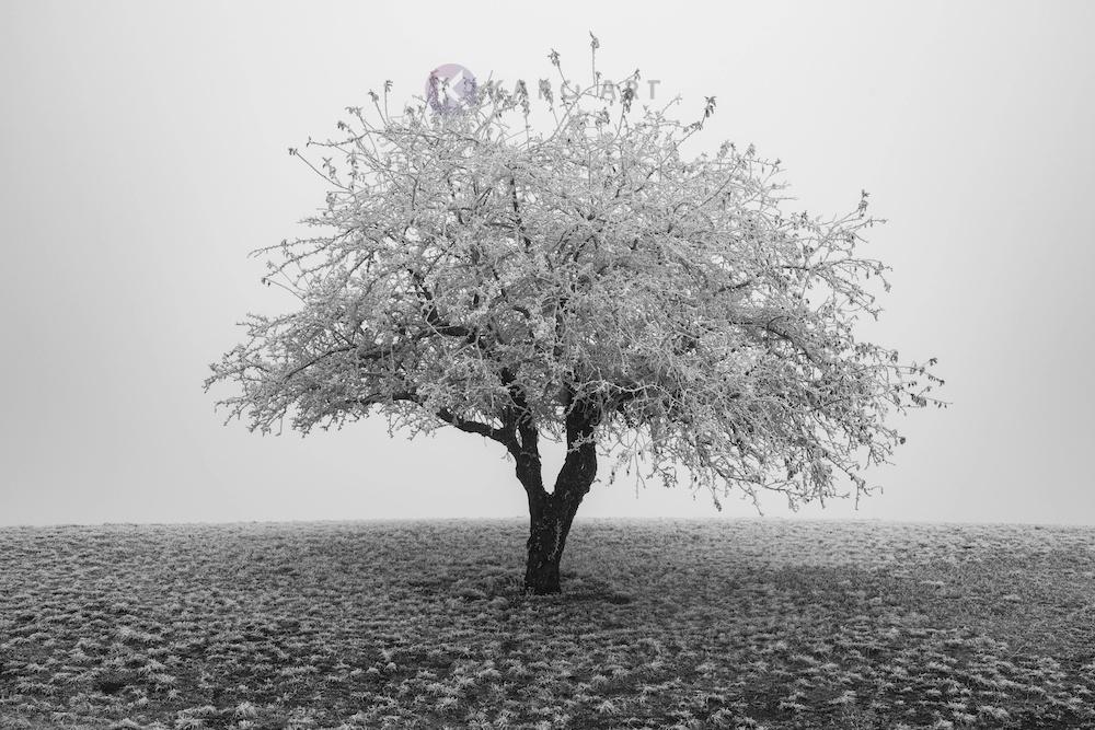 Schilderij - Eenzame boom in het zwart wit, premium print, 3 maten , Wanddecoratie