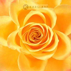 Karo-art Schilderij - Roos in het geel, bloesem