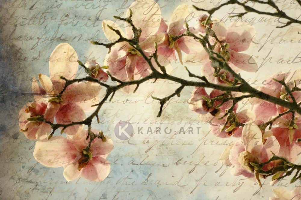 Afbeelding op acrylglas - Magnolia boomtak met een verouderd papieren effect en een oud handschrift