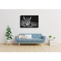 Karo-art Afbeelding op acrylglas  - Jaguar in zwart en wit