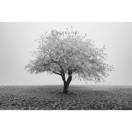 Karo-art Afbeelding op acrylglas - Eenzame boom in het zwart wit