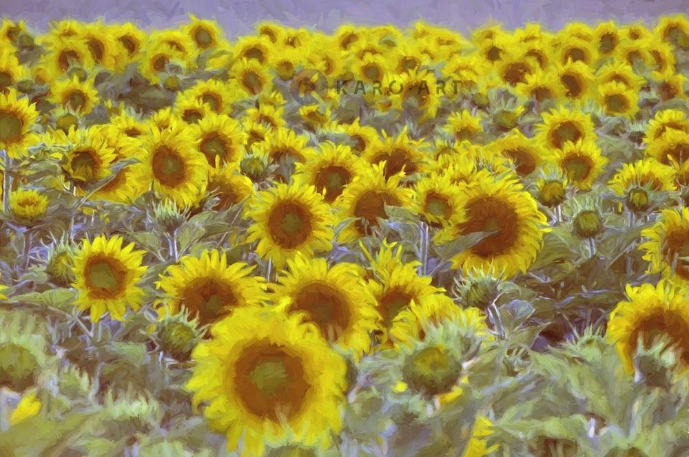 Afbeelding op acrylglas - Veld vol zonnebloemen, digitale kunst.
