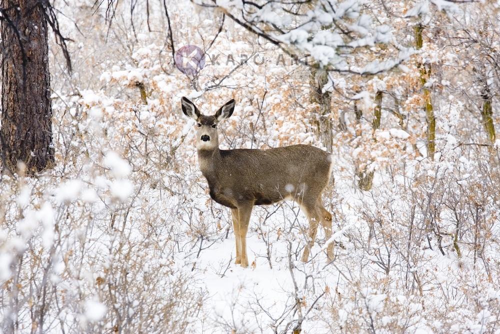 Afbeelding op acrylglas - Hert in de winter