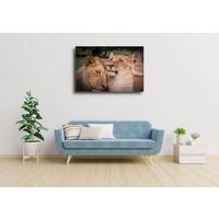 Schilderij - Leeuwen liefde