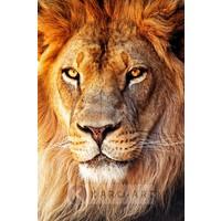Schilderij - Afrikaanse Leeuw, close up