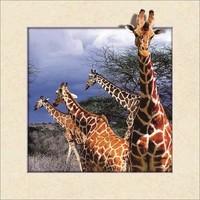 Schilderij - Giraf 3D Look, 30x40