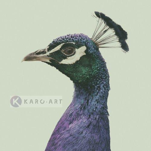 Karo-art Afbeelding op acrylglas  - Pauw , Blauw groen , 3 maten , Wanddecoratie