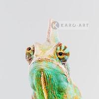 Karo-art Schilderij - Kameleon  ,Groen geel , 3 maten , Premium print