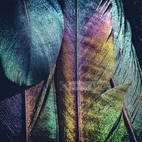 Karo-art Schilderij - Veren Pauw , Multikleur , 3 maten , Premium print