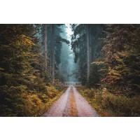 Karo-art Schilderij - Weg in het Bos , multikleur , 3 maten , Premium print