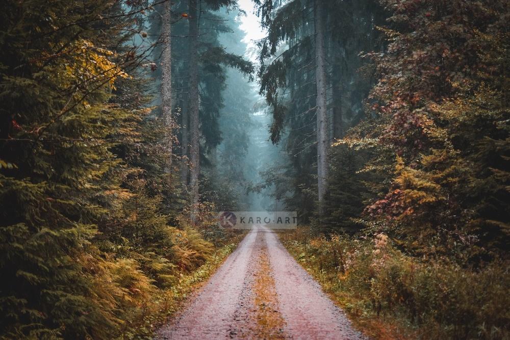 Afbeelding op acrylglas - Weg in het Bos